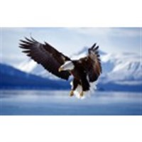 Alaska Cruise Tour - Alaska Wilderness Spectacular