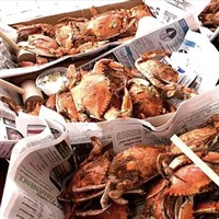Cape May, NJ - Craft Beer, Music & Crab Festival
