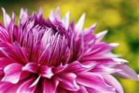 Phila. Flower Show