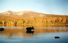 Mountains and Moosin' in Maine 2020